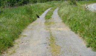 Como no subía a las poblaciones, caminaba en paralelo a la carretera sola...