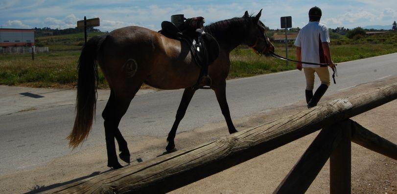 Un jinete y su caballo junto al área de descanso.