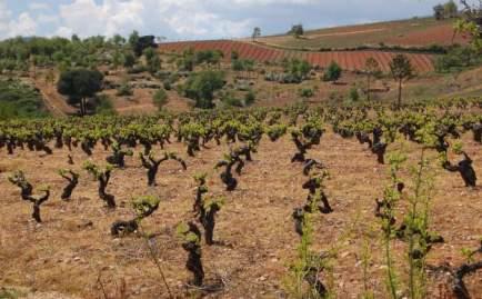 Pero poco dura y empieza un basto tramo de viñedos sin sombra