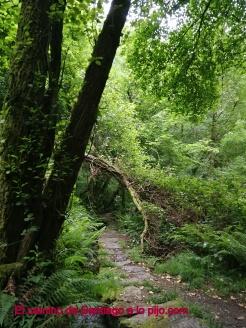 La escalera que lleva hasta el pie de la cascada