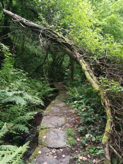 El camino para visitar el lugar